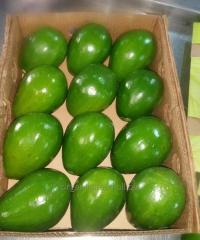 Avocad