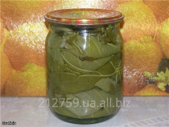 The grape leaves preserved for dolma