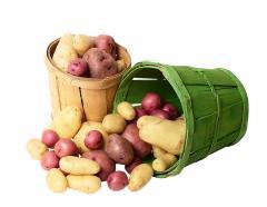 Картофель семенной, Картофель семенной купить,
