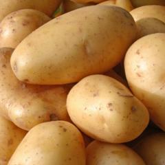 Картофель ранний, Картофель ранний купить,