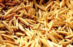 Oats grain, Oats grain wholesale, Oats grain from