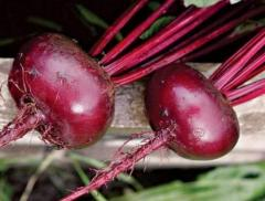 Beet, Beet to buy, Beet wholesale, Beet from the