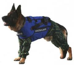 Bullet-proof vest for dogs. Dog bullet-proof vest.