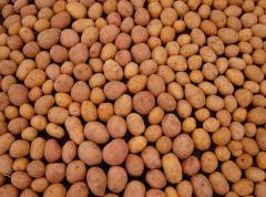 Картофель семенной в сетках по 20 кг