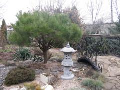 Pine spherical on bole