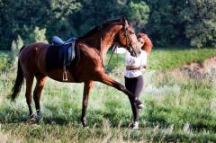 Horses plant Millennium