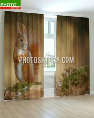 Photocurtains animal squirrel