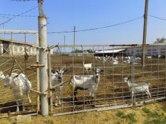 Farm of 8000 hectares 0(95)7806643 Fyodor