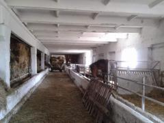 Enterprise agricultural 8000 hectares 0(95)7806643