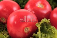 Продам помидоры оптом