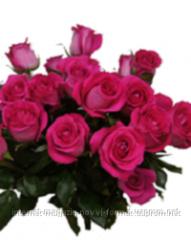 Цветы, Голландская роза Топаз