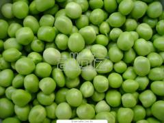 I will sell peas from ton, packing grid
