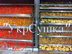 Services of industrial drying, drying of fruit of