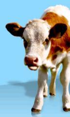 """Milk substitutes tm """"LAKTOFIT"""""""