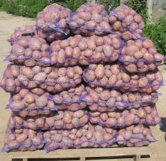 Продам картофель оптом от 10 тонн, доставка по