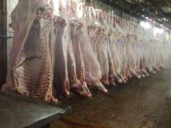 Камера размораживания мяса