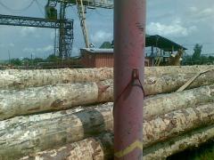 Round wood (sawlog)