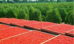 Dara Karpat, Godzhi's Berry — the New Product