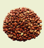 Beans horse (Horse beans)