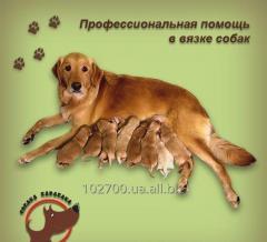 Помощь специалиста в вязке собак!