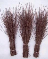 Broom birch