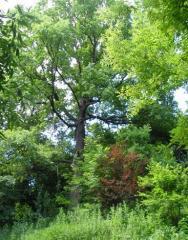Земли, покрытые лесной растительностью