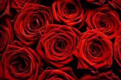 Розы почвопокровные СНОУ БАЛЕТ