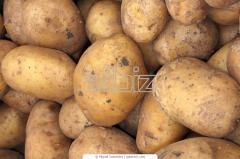 Potatoes, from the producer, for export, a grade,