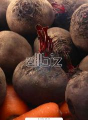 Beet table, from the producer to buy, expor