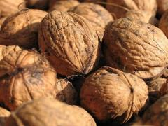 Саженцы грецкого ореха привитые