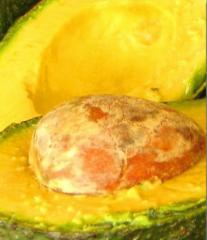 Авокадо (Persea americana), авокадо оптом Украина