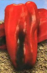 Перец Самурай F1 красный