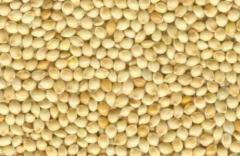 Millet white