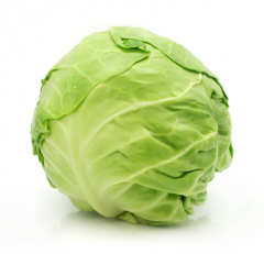 The cabbage is fresh