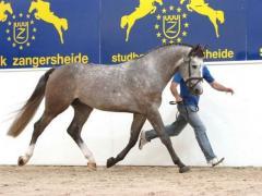 Лошадь родословная — Chablis I Z