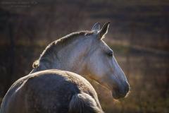 Лошади родословная