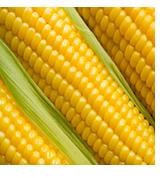 Крупа кукурузная весовая и фасованная