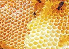 Honey in cells