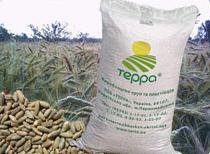 Grain rye TERRA