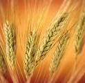 Продукция сельскохозяйственная