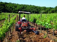 Equipment for care of vineyards pristvolny