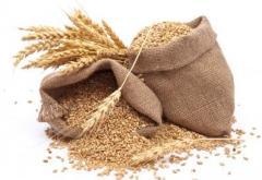 Grain of wheat of 2-3 C