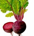 "Seeds of table beet ""Red"