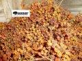 Рябина красная,ягоды сухие,1 кг