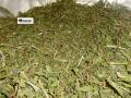 Ivan tea, grass, 1 kg