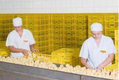 Суточные цыплята-бройлеры под торговой маркой 'Гавриловские цыплята'