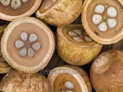 Babassu oil water-soluble, babassu VRM from 1 kg