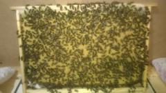Пчелопакеты 2015. Карпатская порода.