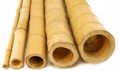 Бамбук для интерьера.