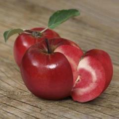 Яблоня, груша, абрикос, персик, нектарин, слива,